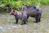 Fish Creek: bears