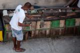 Pigeon Handler Havana, Cuba - May 2012