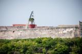Big Tree Moving Havana, Cuba - May 2012