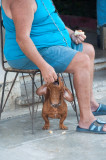 Anticipation -Havana, Cuba - May 2012