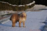 Ozzy loves snow