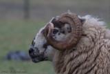 Eye can see ewe