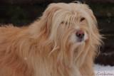 Ozzy the snow dog