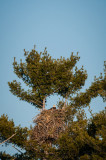 a huge eagle's nest