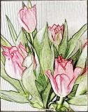 Tulip sketch....