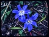 Pretty spring flowers...