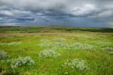 Meadow near Gullfoss