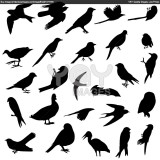 Birds from  Everywhere