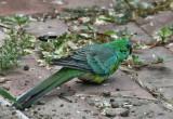 ???? Parrot