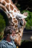Giraffes & Camels