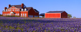 Red House on Bluebonnet Hill