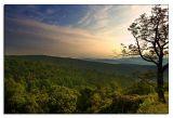 Morning. Shenandoah National Park.