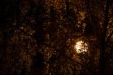 Night Sun Behind The Tree