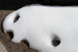 Snowy Seal