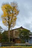 Japan Autumn Foliage
