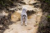 trekking companion