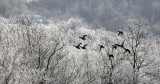 BIRD - DUCK - MALLARD - OTOWABASHI - TSURUI TOWN - HOKKAIDO JAPAN (3).JPG