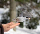 BIRD - NUTHATCH - EURASIAN NUTHATCH - KINOHIROBA PARK - ABASHIRI - HOKKAIDO JAPAN (3).JPG