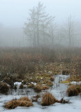 Foggy Swamp_7916.jpg
