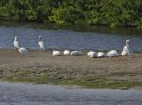 Ding Darling National Wildlife Reserve, Sanibel