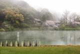 The misty pond