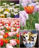 Flowers of Huis Ten Bosch