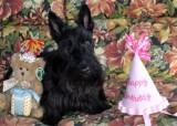 Birthday Girl {Two yrs old}.jpg