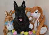 Easter 2013-1.jpg