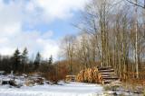 Winter in the wood / Vinter i skoven