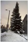 Christmas Tree ?