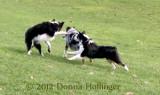 Frolicking Shepherd Style