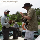 Juanito e Pedro With Water Hyacinth