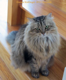 Poco, Anni's Cat