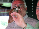 A Long-Billed Woodcreeper Flew into our Boat
