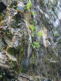 Ferns growing in the Khaledonia waterfall