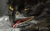 gato pajaro.jpg
