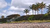 Florida Palms on the Beach