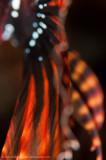 Flamenco Abstract