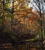 Autumn - 2012