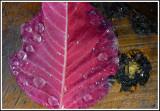 Autumn leaf-48