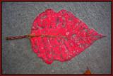 Autumn leaf-51