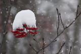 SnowsHere.jpg