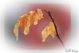 Last leaves.jpg