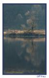 Fall Tree Reflection.jpg