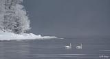Winter swans.jpg