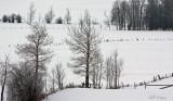 Snow Fields6.jpg