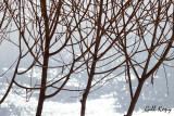 Willow on ice2.jpg