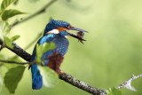 Bird / Fugle