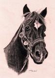 Crescendo 1984-2012 - charcoal, 9 x 12