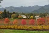 Autumn in the Napa Valley - November, 2012